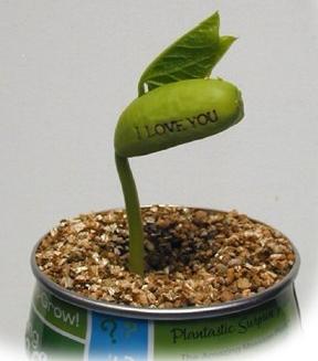 Message Plant
