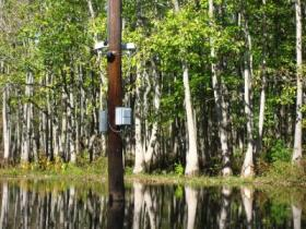 Cameras Search for Ivory-Billed Woodpecker