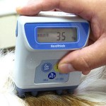 Measure Your Dog's Body Fat