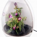 Have your very own USB greenhouse