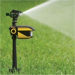 motion activated sprinkler turns on the water when it senses movement