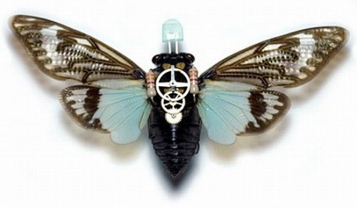 Mad scientists create bionic moths