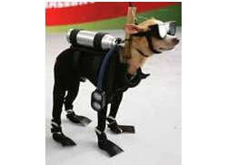 Four-Legged Wetsuits make pets hate you