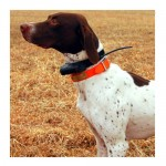 Garmin announces new GPS dog collar to track your hounds