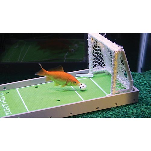 R2 Fish School Training Kit