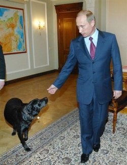 Vladimir Putin puts a satellite collar on his dog
