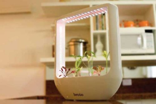 Grow plants with no soil
