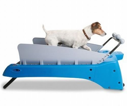 Canine treadmill takes the dog for a walk while you play video games