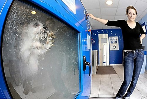 Dog-O-Mat: Automatic dog-washing vending machine