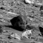"""Alien skull"" spotted on Mars"