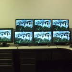 HP USB Graphics Adapter palm tree background on multiple monitors