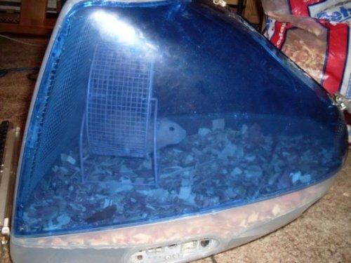 iMac Hamster Cage on Ebay