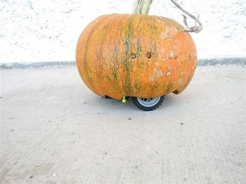 Scare Trick-or-Treaters with a Rovin&#039; Pumpkin this Halloween