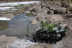 Roboplant, the walking robot plant team