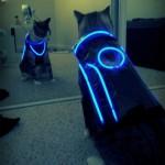 TRON Cat costume