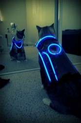 TRON Cat costume