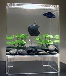 Mac fish tank made from an old Power Mac G4 Cube