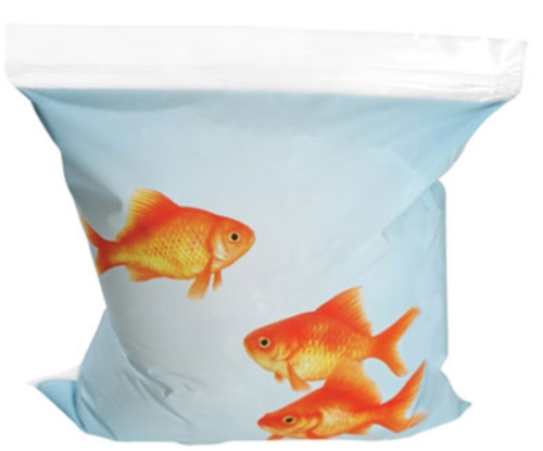 Gold Fish Sandwich Bags